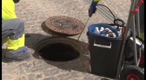 Se intensifica en Orihuela la campaña para evitar la proliferación de plagas