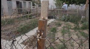 Los talleres municipales de agroecología han permitido formar a los usuarios de los huertos urbanos