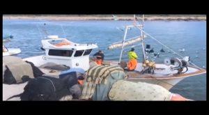 El Ayuntamiento de Guardamar potencia el sector pesquero local