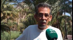 La Asociación Palmeral Vivo de Orihuela denuncia la mala gestión del Ayuntamiento contra el picudo