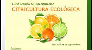 Medio Ambiente colabora con la Conselleria para ofrecer un curso de especialización en Citricultura
