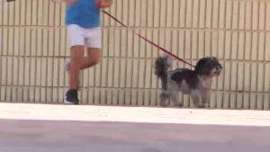 División de opiniones en Rafal ante una nueva ordenanza que regula la tenencia de animales