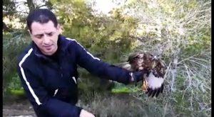 Un águila ratonera es rescatada por un policía de Bigastro