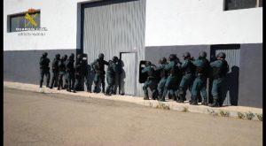 Guardia Civil ha desarticulado en la Vega Baja un entramado dedicado al cultivo y tráfico de drogas