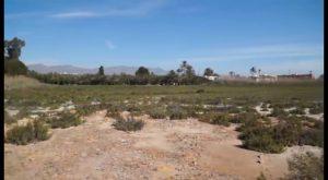 San Isidro proyecta un vial sobre paraje de El Saladar