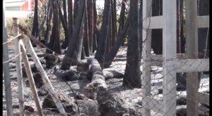 El fuego calcina un nuevo vivero de palmeras esta vez en Bigastro