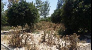 """El PP de Dolores denuncia el """"lamentable"""" estado de los parques y nuevos sectores del municipio"""