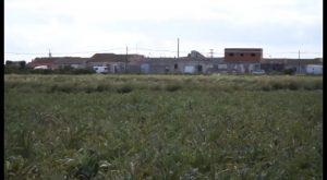 Las jornadas en defensa de la Huerta concluirán con un recorrido por la huerta de Almoradí