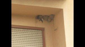Rojales inicia una campaña para que los vecinos respeten los nidos de Golondrinas