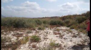 Bigastro convertirá la antigua escombrera de la Pedrera en una zona de esparcimiento