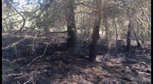 Un incendio forestal calcina una treintena de pinos en la Vega Baja