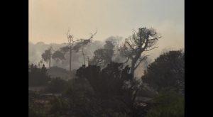 Llamamiento a la colaboración ciudadana para esclarecer las causas de los incendios en Guardamar