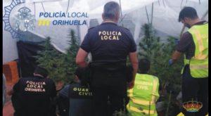 Policía Local y Guardia Civil de Orihuela desmantelan una producción de plantas de marihuana