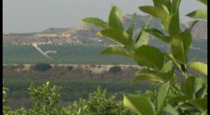 Nuevos pasos para la implantación del ZAL en el sur de la provincia