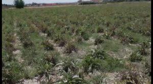 Un año negro para los cultivos de la comarca: la sequía deja números alarmantes