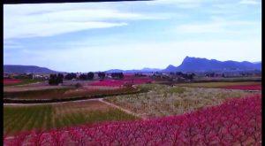 El espectáculo de la floración de Cieza, a un paso de la Vega Baja