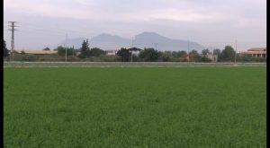 Les Corts aprueban por unanimidad proteger la huerta de la Vega Baja a propuesta de Podemos