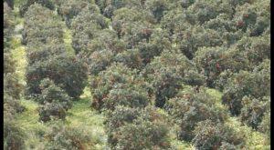 La Guardia Civil detiene a 3 personas por la estafa en la compra-venta de 163 toneladas de naranja