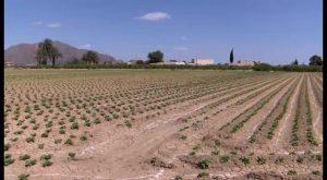 Proteger la huerta tradicional y garantizar la actividad agrícola