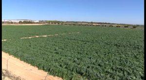 Fomentar la actividad agraria en Orihuela se premiará con una subvención de hasta 3.000 euros