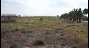 El Campo de Concentración de Albatera, uno de los más duros de España