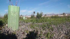 AHSA pide protección para el Saladar, los azarbes y los huertos de palmeras en San Isidro