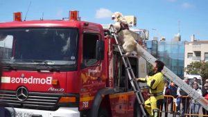 Bomberos y Protección Civil se exhiben en Orihuela