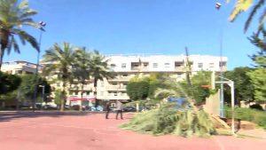 El oriolano parque de La Ocarasa, cerrado por caer una palmera