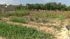Fomentando la agricultura a través de los huertos ecológicos