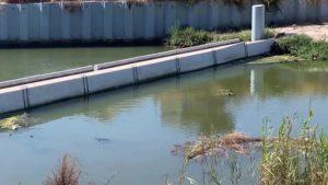 La Confederación Hidrográfica limpia los residuos flotantes de la desembocadura del Segura