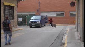 Terapia de recuperación y prevención de agresiones de casos de violencia de género con perros