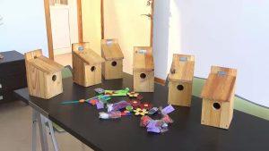 Bigastro inicia un proyecto de cajas nido para combatir plagas en la Ruta Alquibla
