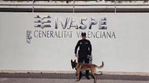 Un agente de la Policía Local de Dolores realizará un curso especializado para guías caninos
