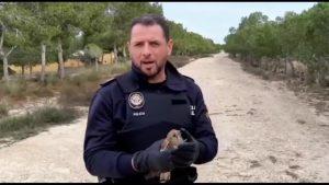 La policía local de Bigastro logra recuperar y poner en libertad un ave rapaz
