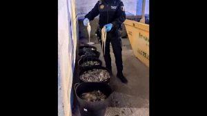 La policía local de Orihuela encuentra en una furgoneta 113 kilos de pulpo