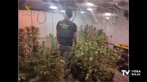 La Guardia Civil detiene en Dolores a un hombre de 43 años por presunto cultivo de drogas
