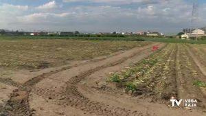 ASAJA Alicante denuncia el fraude de etiquetado de fruta y verdura