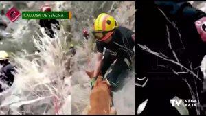 Los bomberos logran rescatar a un perro atrapado en una zona de difícil acceso en Callosa
