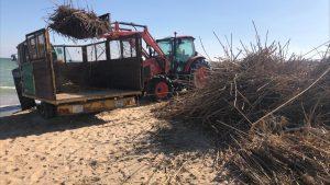 Guardamar retira entre 800 y 1.000 toneladas de bardomeras de sus playas