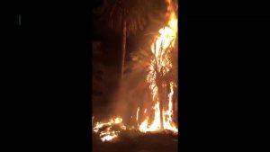Un incendio provocado por enseres calcina varias palmeras en San Fulgencio