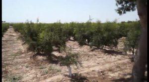 Los pozos de sequía de Orihuela continúan parados a pesar de la situación extrema