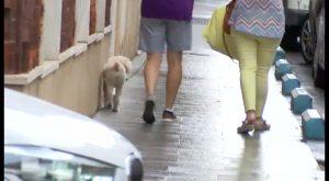Un traficante pagará el veterinario de varios perros intoxicados con el hachís que tiró cuando huía
