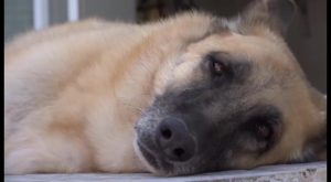 Las residencias caninas aumentan su demanda durante el verano