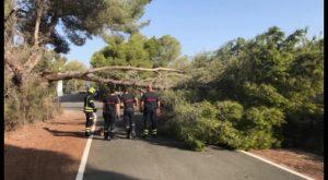 Un árbol de grandes dimensiones cae sobre la CV-952 sin provocar daños