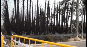 Un incendio calcina decenas de palmeras y provoca una explosión en una torre de alta tensión