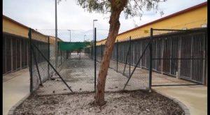 La protectora de Orihuela impulsa las terapias con animales para discapacitados y mayores
