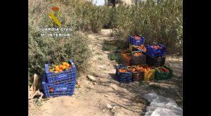 La Guardia Civil detiene a dos hombres por el robo de 5 toneladas de naranjas en Orihuela