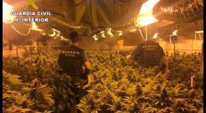 La Guardia Civil detiene a una pareja en Catral que tenía una plantación de marihuana en el garaje