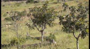 Riego para la reforestación de la Sierra de Redován