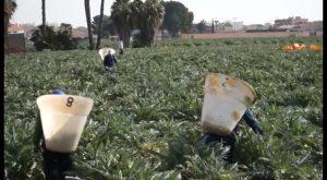 La alcachofa de la Vega Baja celebra un Blogtrip para impulsar su consumo en las redes